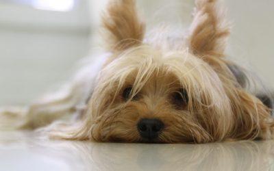 I consigli di Irene: Aiuto! Perché il mio cane si mangia i bisogni?