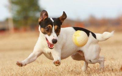 I consigli di Irene: Perchè i cani amano la pallina?