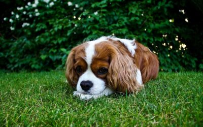 I consigli di Irene: Perché il cane mangia l'erba?